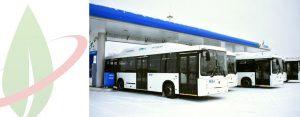 Nuovi autobus a gas naturale attivi per le strade della Russia nordoccidentale